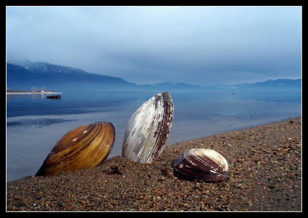 Un compañia a lago Kerkini Grecia