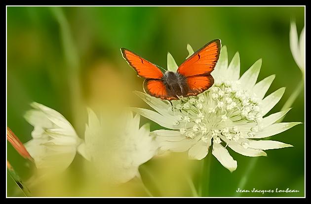 Un de mes papillons