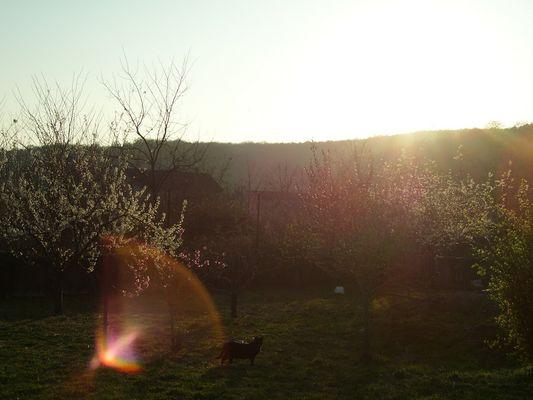 un des premiers crepuscule du printemps