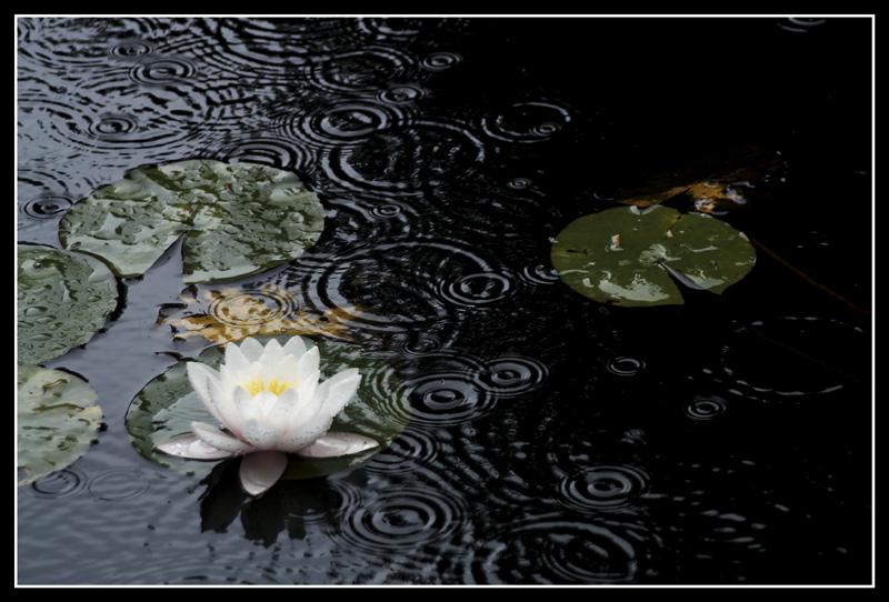 Un dimanche tranquille à compter les ronds dans l'eau
