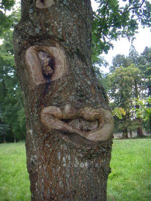 Un drôle d'arbre vu en Bretagne