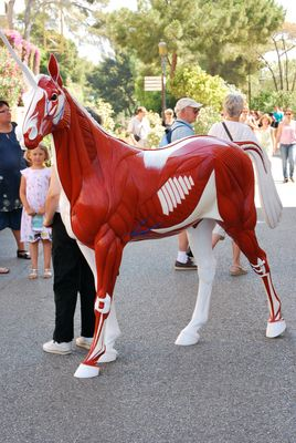 Un drôle de cheval !!!!!