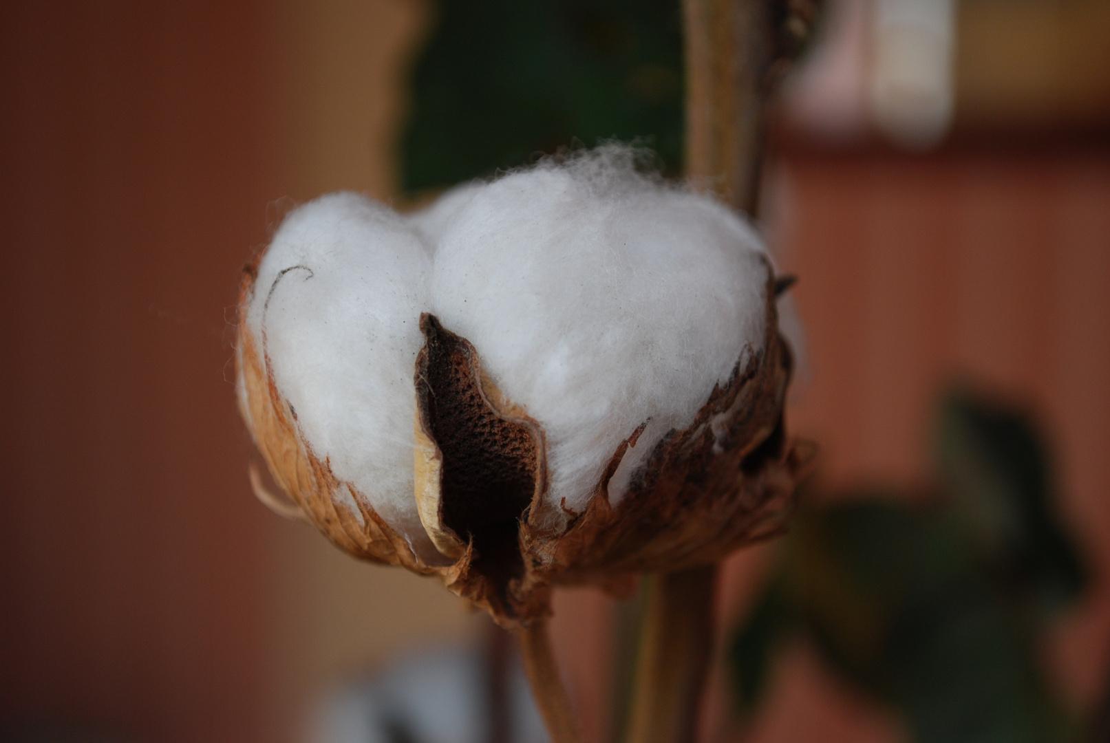 un ecrin de coton