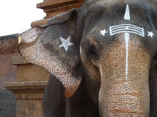 Un éléphant de parade