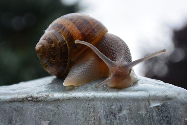un escargot sous la pluie 2