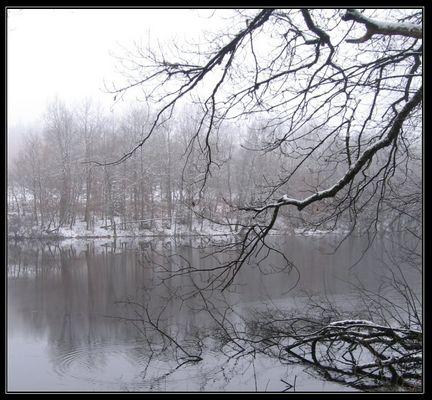 Un étang dans la douceur de l'hiver
