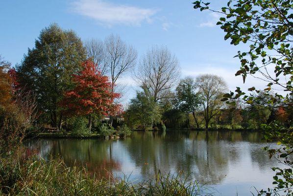 Un étang dans ville