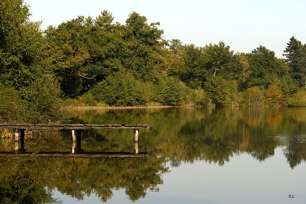 ...Un étang en Sologne....