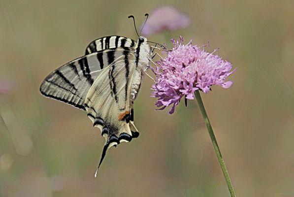 Un fiore attraente.........