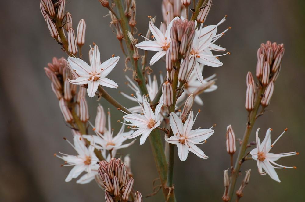 un fiore bello ma poco profumato...