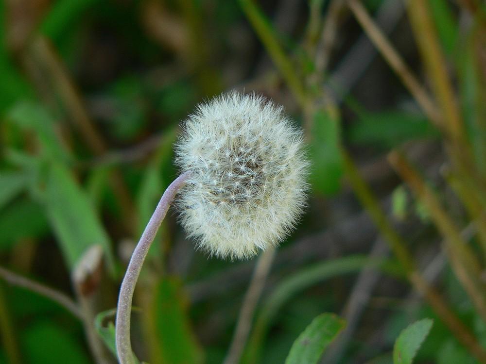 Un fiore delicato......