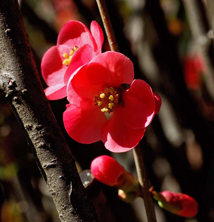 Un fiore nascosto