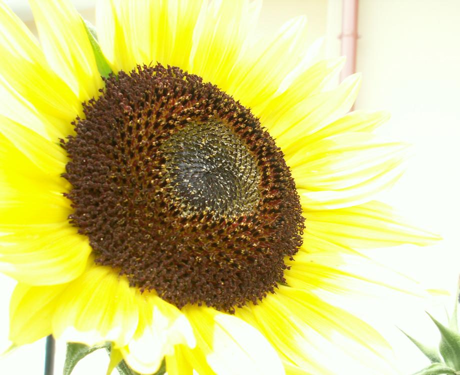 Un fiore per il nostro Amore