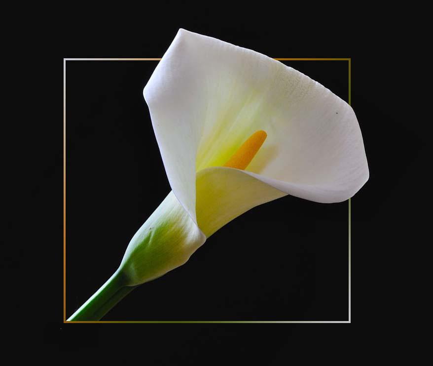 Un fiore per Lei...