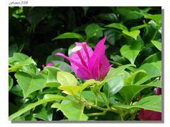 Un fiore, un colore