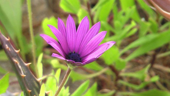 un flor es un flor y es algo.