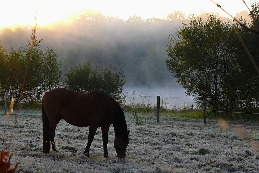 Un froid matin d'automne