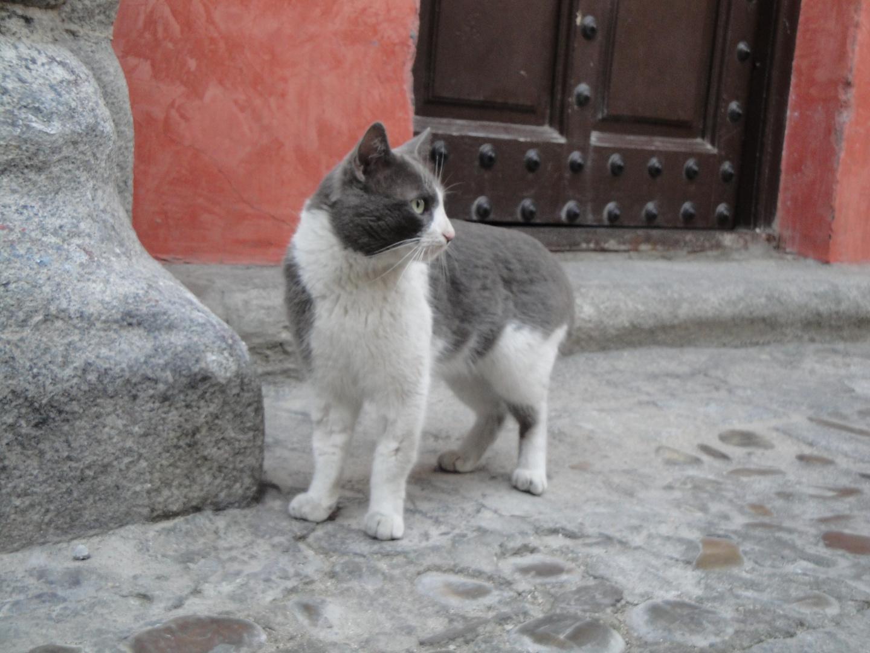 un gato de Toledo