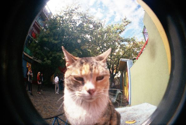 Un gato (robado a contraluz) en la calle, Caminito