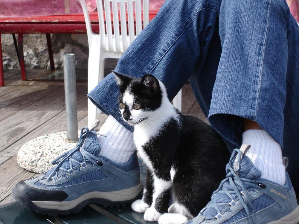 un gattino simpatico
