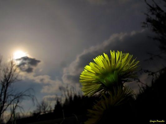 Un goccio di Sole
