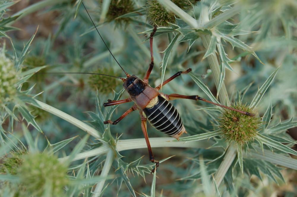 un gros insecte