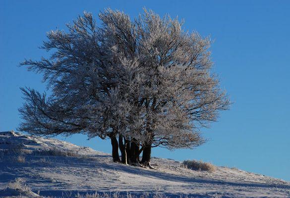 Un groupe d'arbres affrontant l'hiver