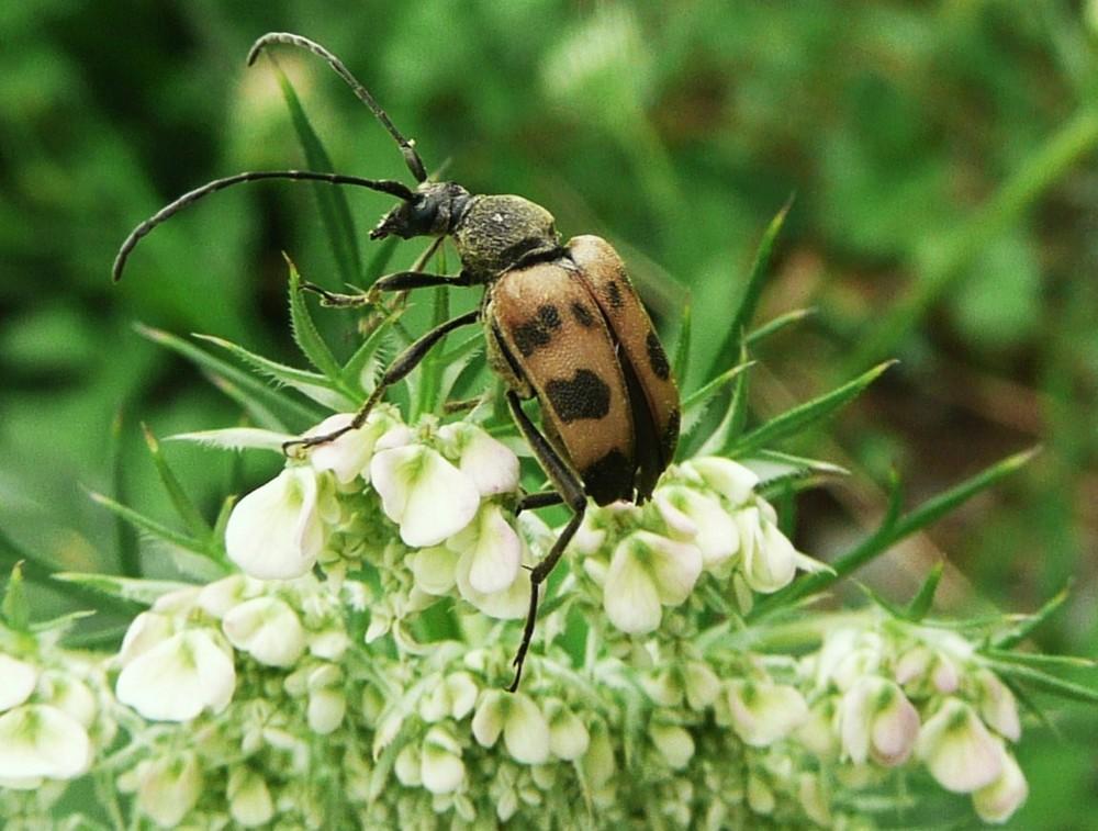 Un insecte... lequel? je ne sais pas