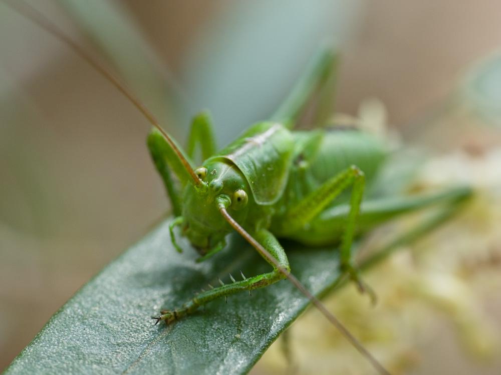 Un intrus sur mon olivier