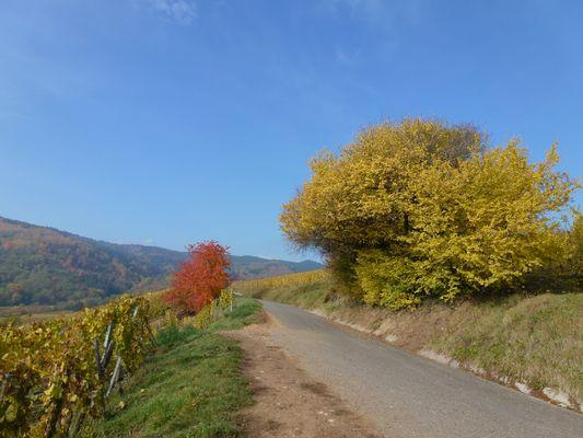 Un jour d'automne en Alsace