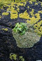 Un îlot de verdure...