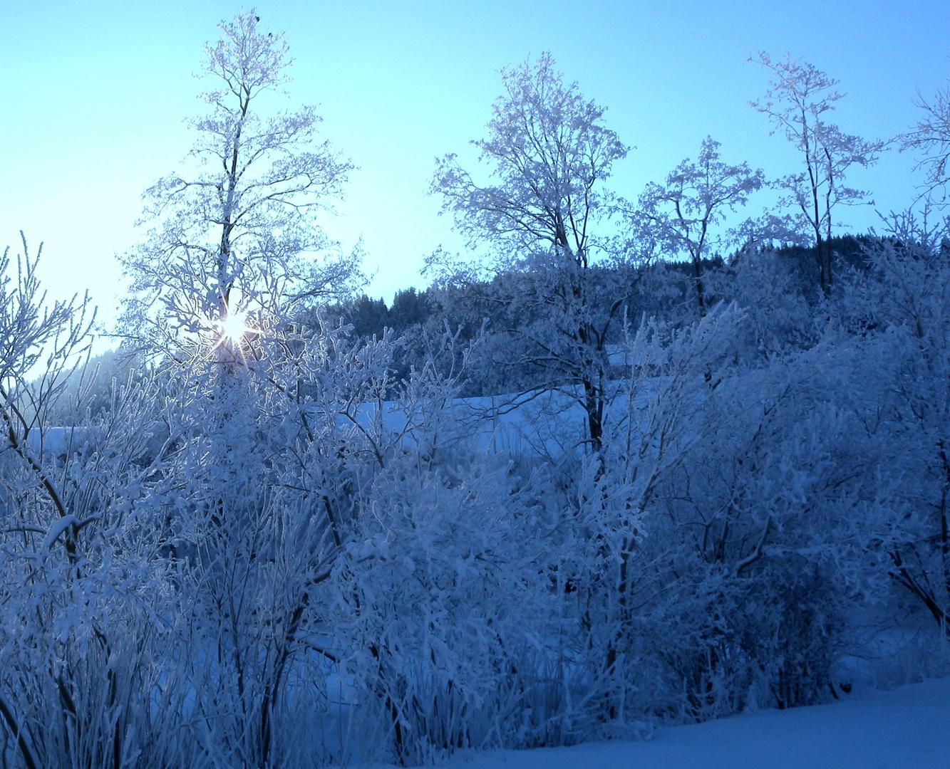 Un matin dans la région d'Appenzell.001