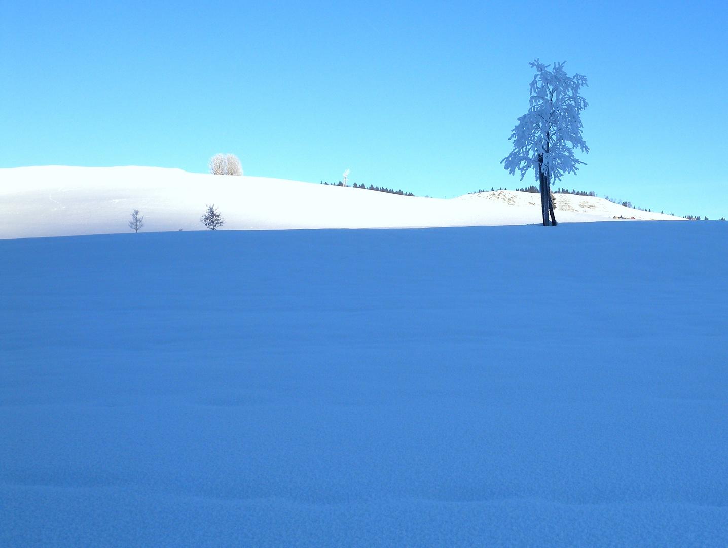 Un matin dans la région d'Appenzell..02