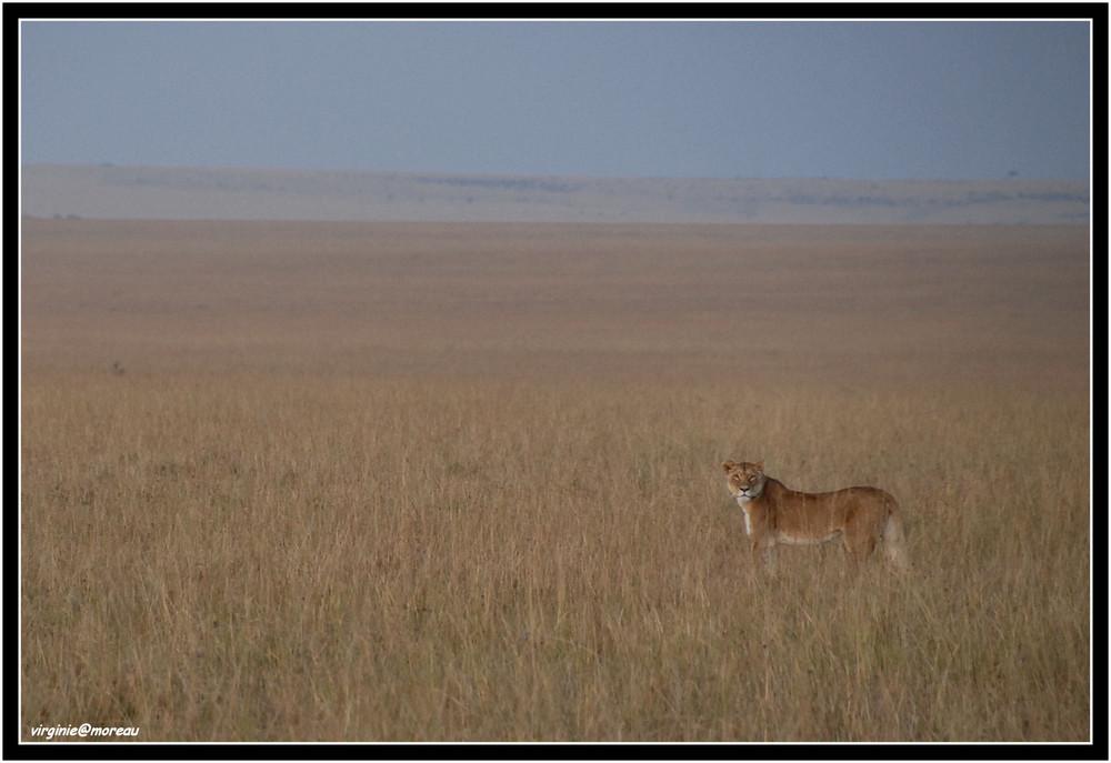 Un matin dans le Masai Mara...
