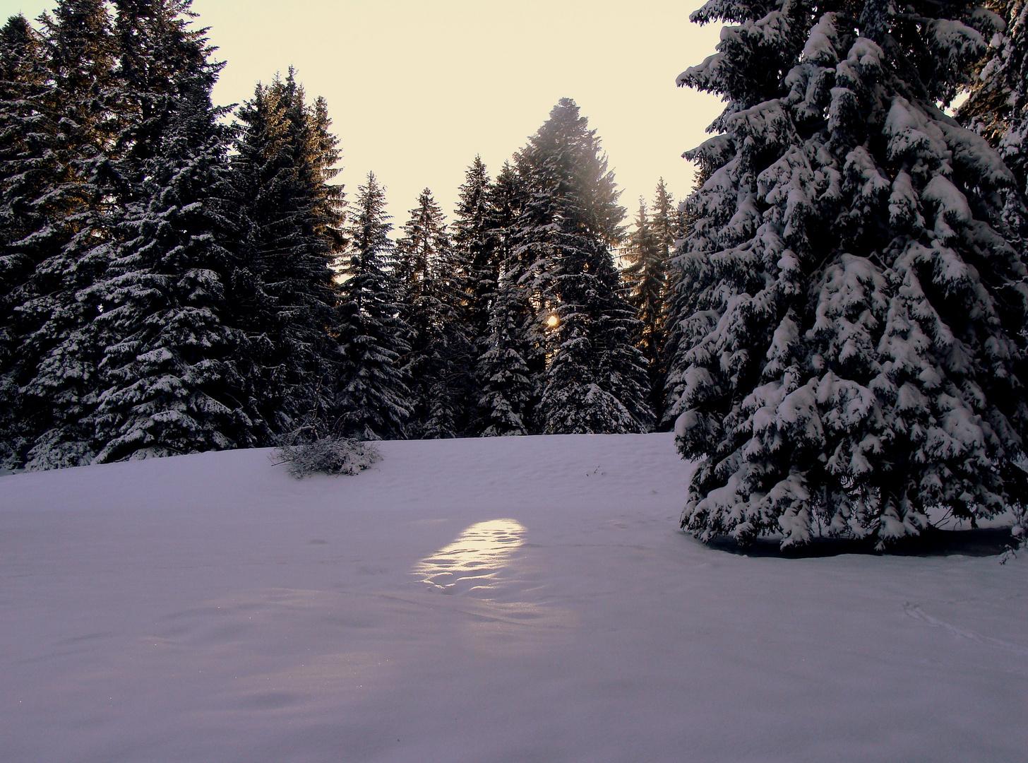 Un matin dans les Franches Montagnes...01