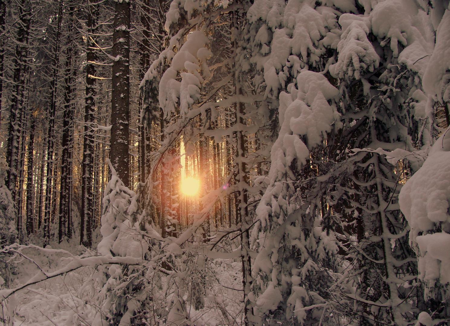 Un matin dans les Franches Montagnes...02