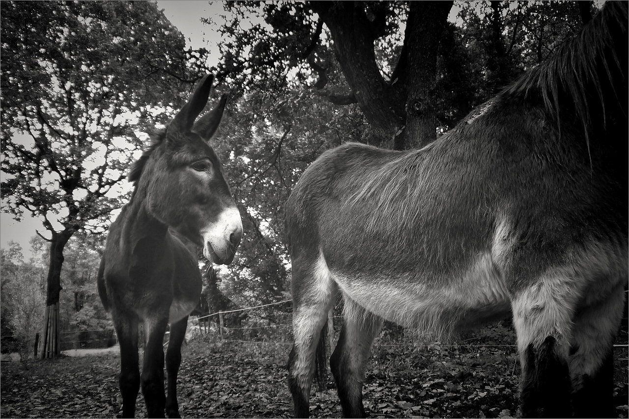 Un âne passe
