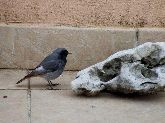 un oiseau 2