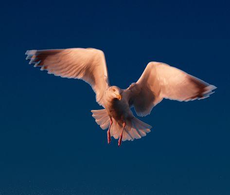 Un oiseau de passage