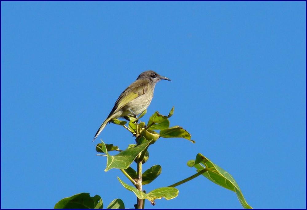 un oiseau du paradis