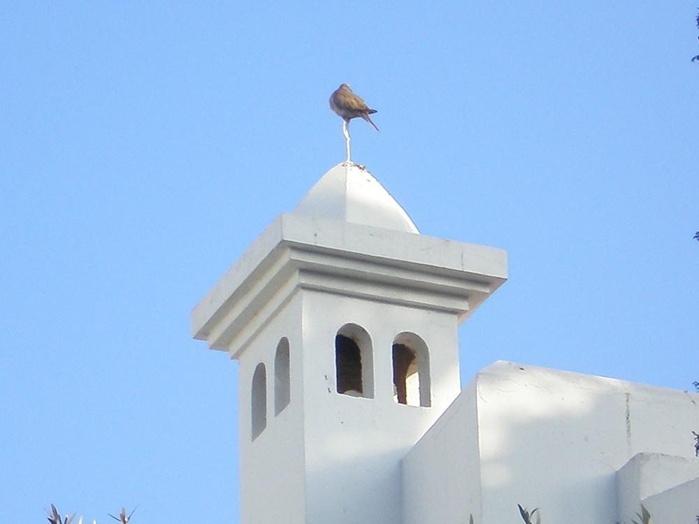 Un oiseau sur le toit