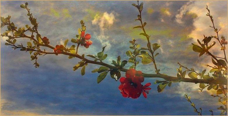 Un orage en fleurs