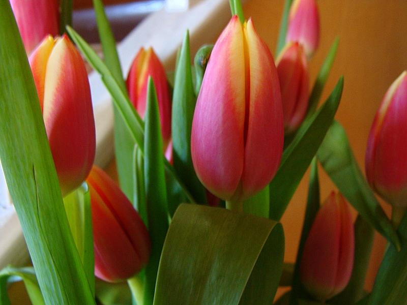 Un p tit bouquet de tulipes