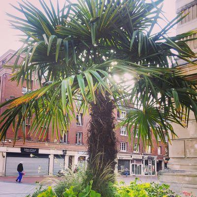Un palmier en plein centre ville