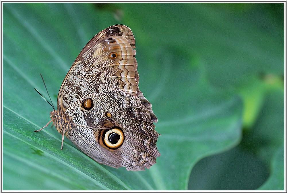 Un papillon aux couleurs chatoyantes