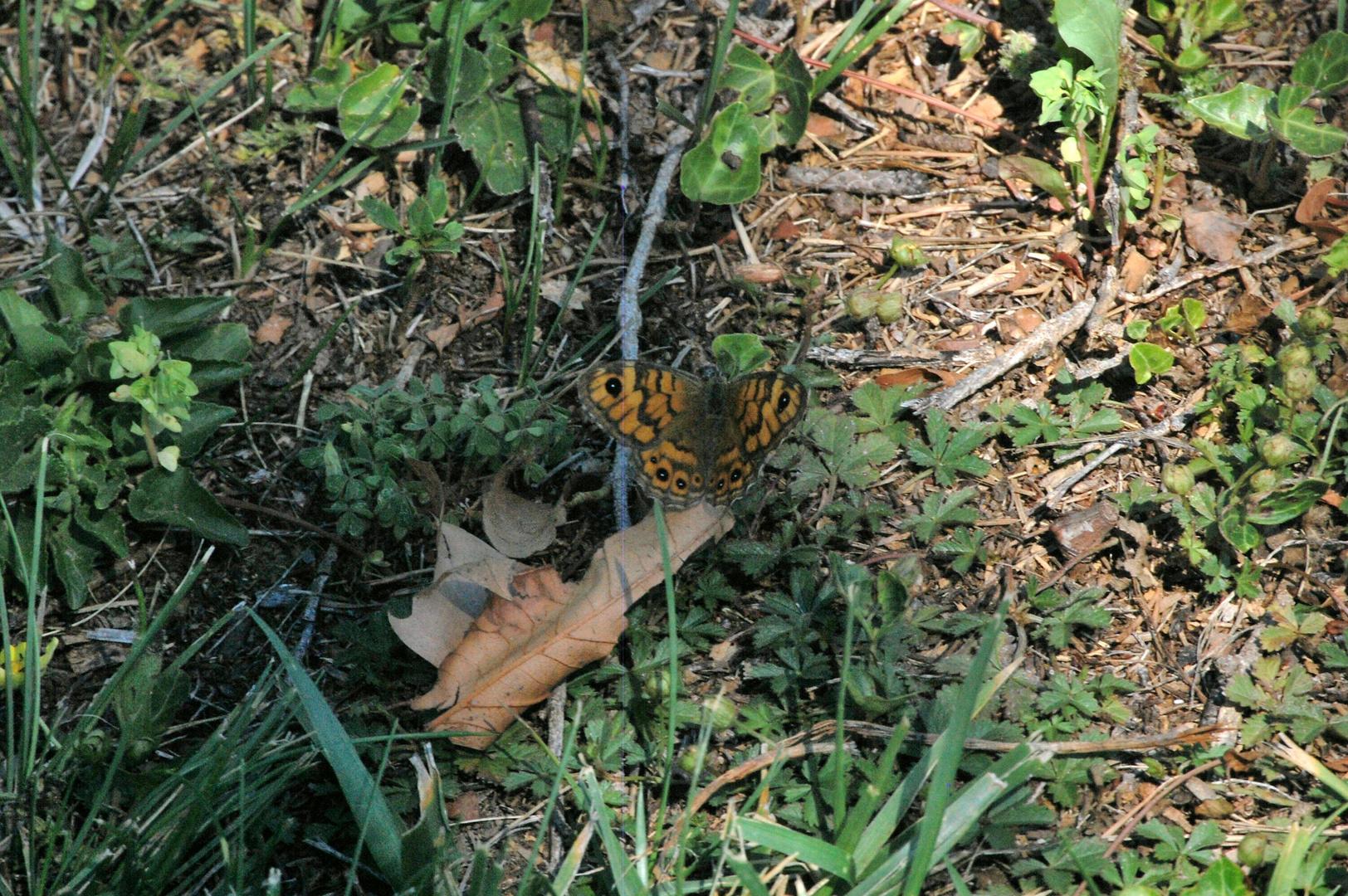 un papillon dans le jardin