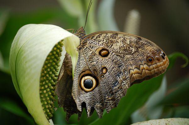 Un papillon... Mon oeil !