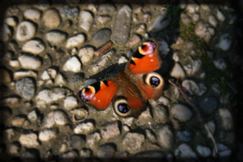 Un papillon se pose