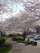 Un paseo ordinario en primavera