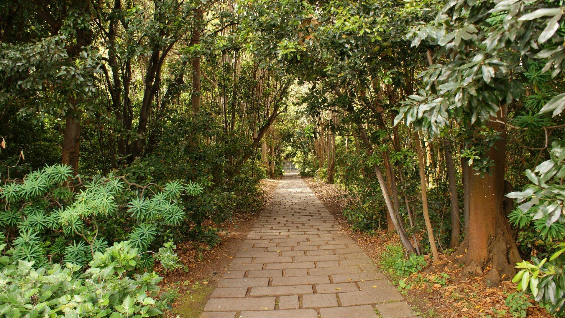 Un paseo por le jard n canario imagen foto emociones for Jardin canario